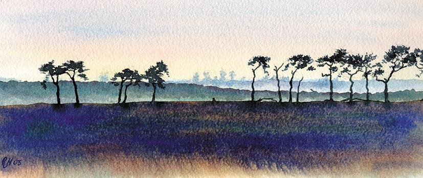 Pines-near-Ramsholt