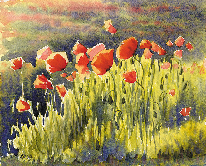 Sunlit-Poppies